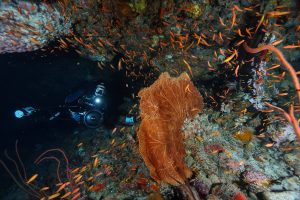 Dive Trip Pulau Weh With ODYdive