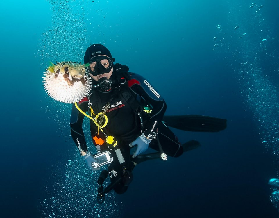 Puffer Fish Divetrip to Pulau Weh With Odydive