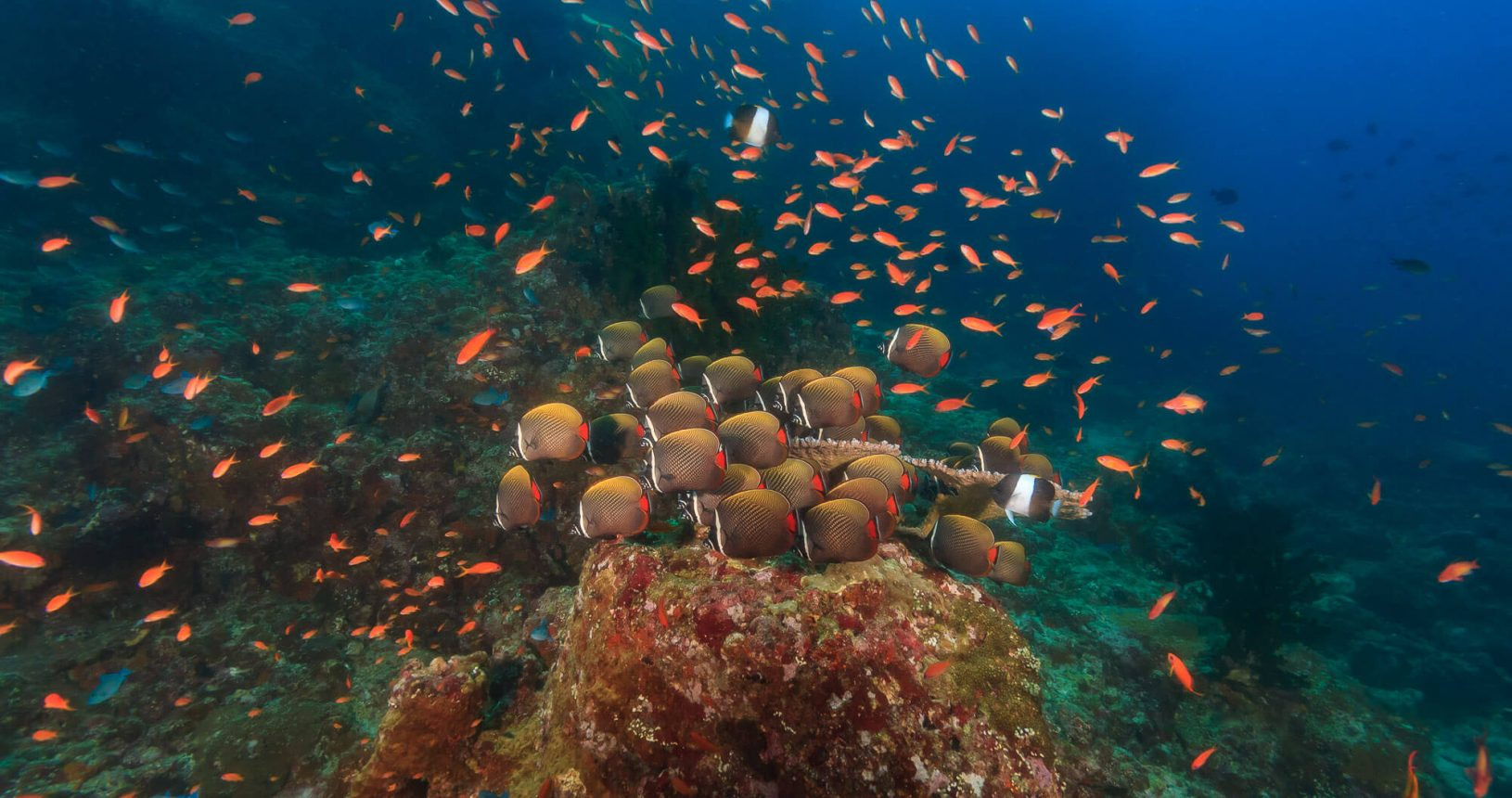 Schooling Fish : Divetrip to Pulau Weh With Odydive