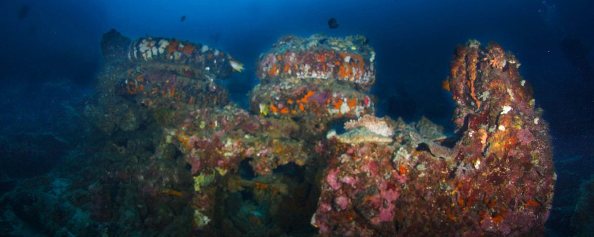 Ody DIve Trip to Morotai